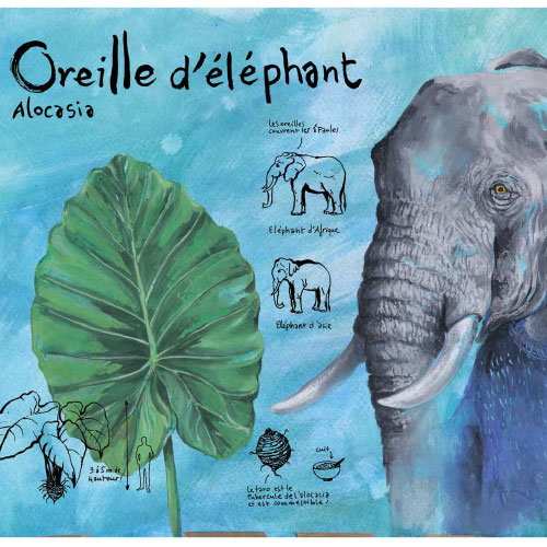 oreilles_delephant_bloc_isbn